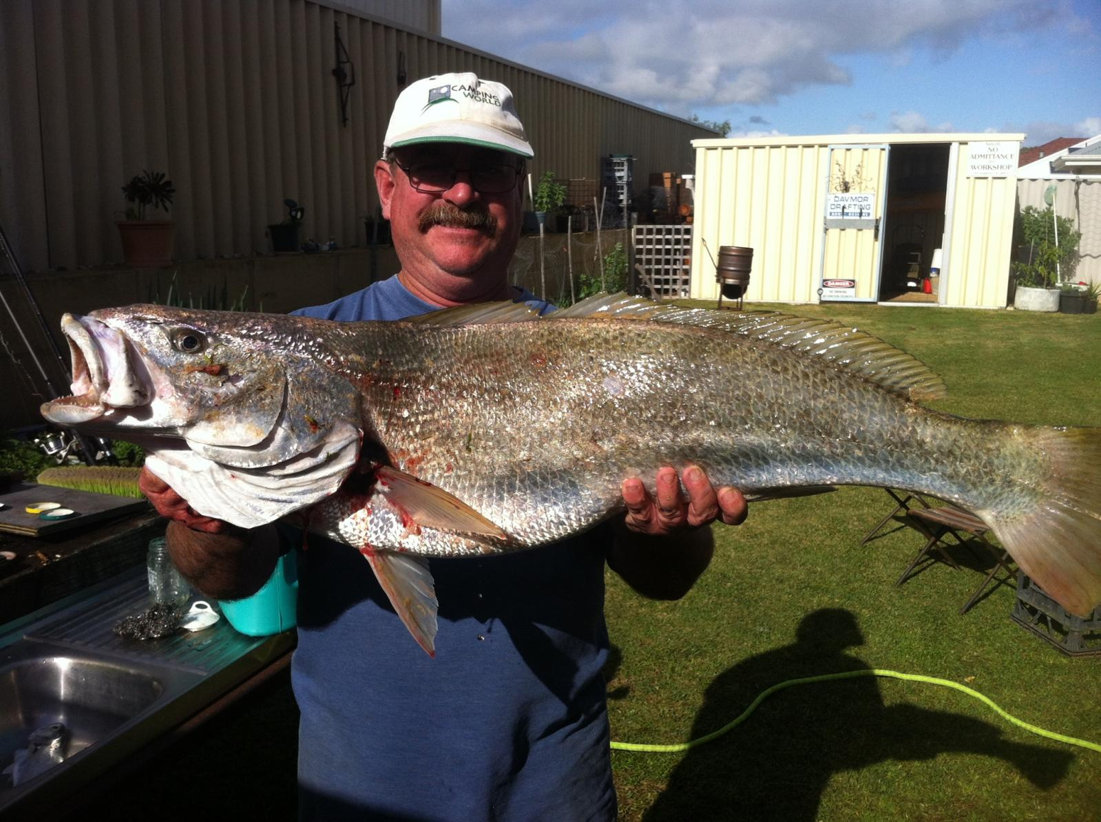 1m Mulloway caught at Dalyellup
