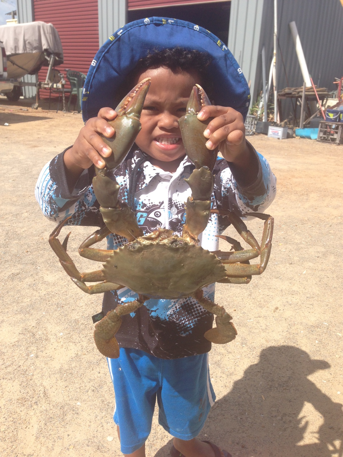 Serious Size Mudcrab - watch those fingers!